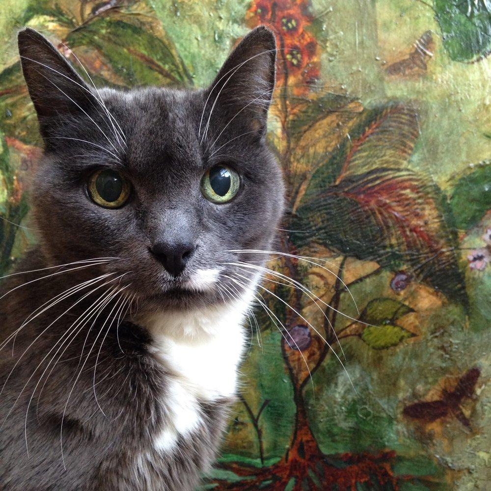 Diane's Seattle Cat Sitting Service: Seattle, WA
