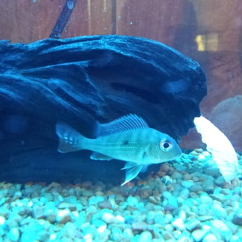 tong s tropical fish pet and supplies 36 photos 24
