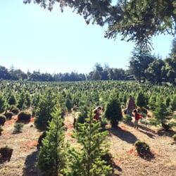 Crest Ranch Choose & Cut Christmas Trees - 16 Photos & 21 Reviews ...