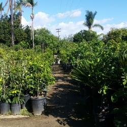 Atkins Nursery 10 Reviews Nurseries Gardening 3129 Reche