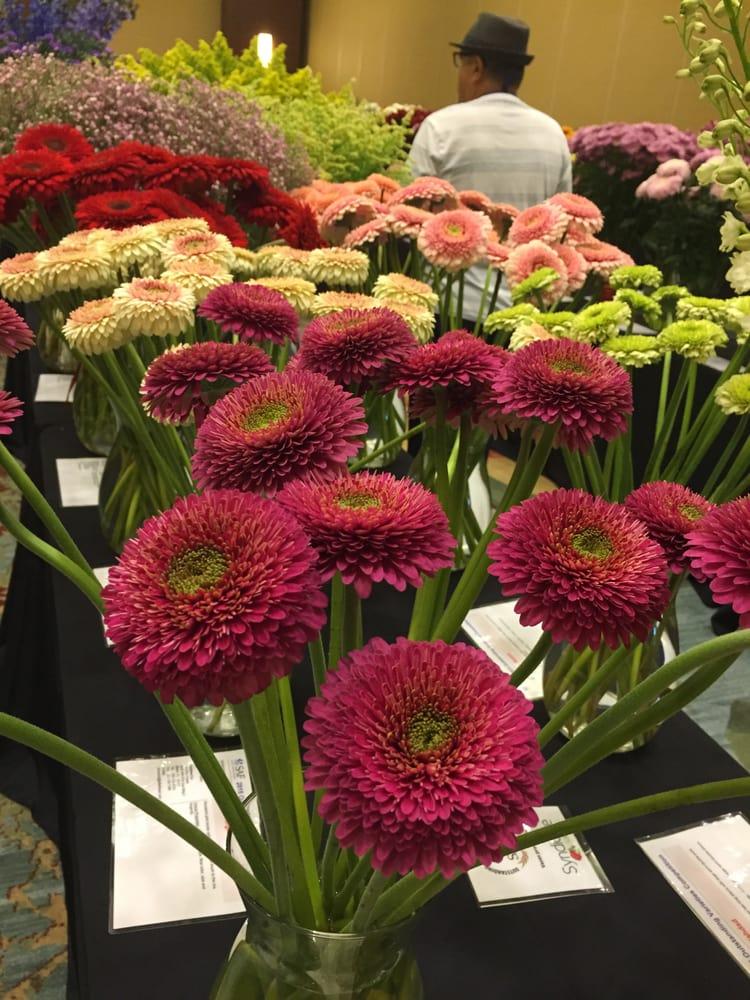 Photo Of Fort Lauderdale Flower Market Fl United States Burgundy