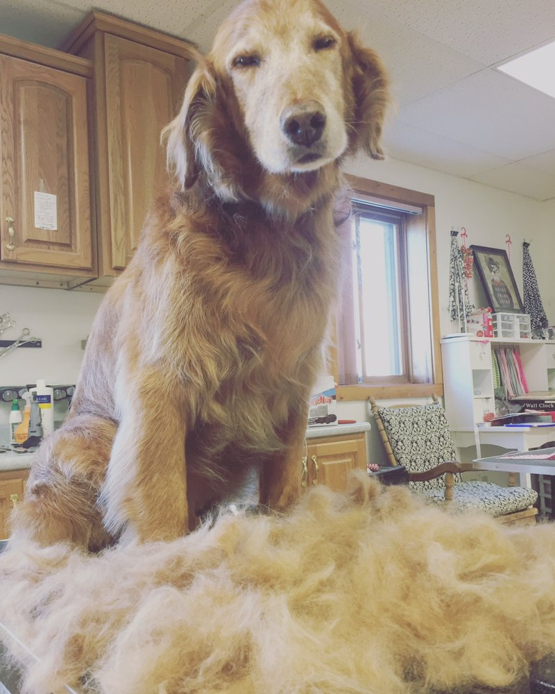 Pet Pros Dog & Cat Grooming: 456 S Pierre St, Pierre, SD