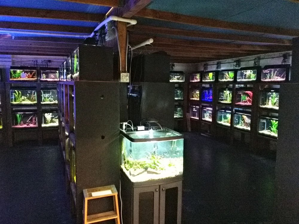 Caesar's Tropical Fish Factory Inc: 1648 Piner Rd, Santa Rosa, CA