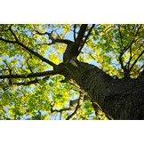 Cannon Tree & Lawn Service: Adel, GA