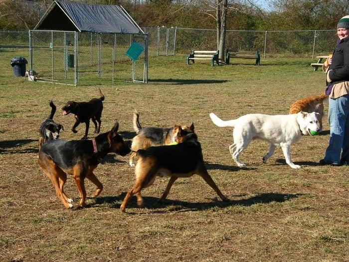 Hanover Dog Park