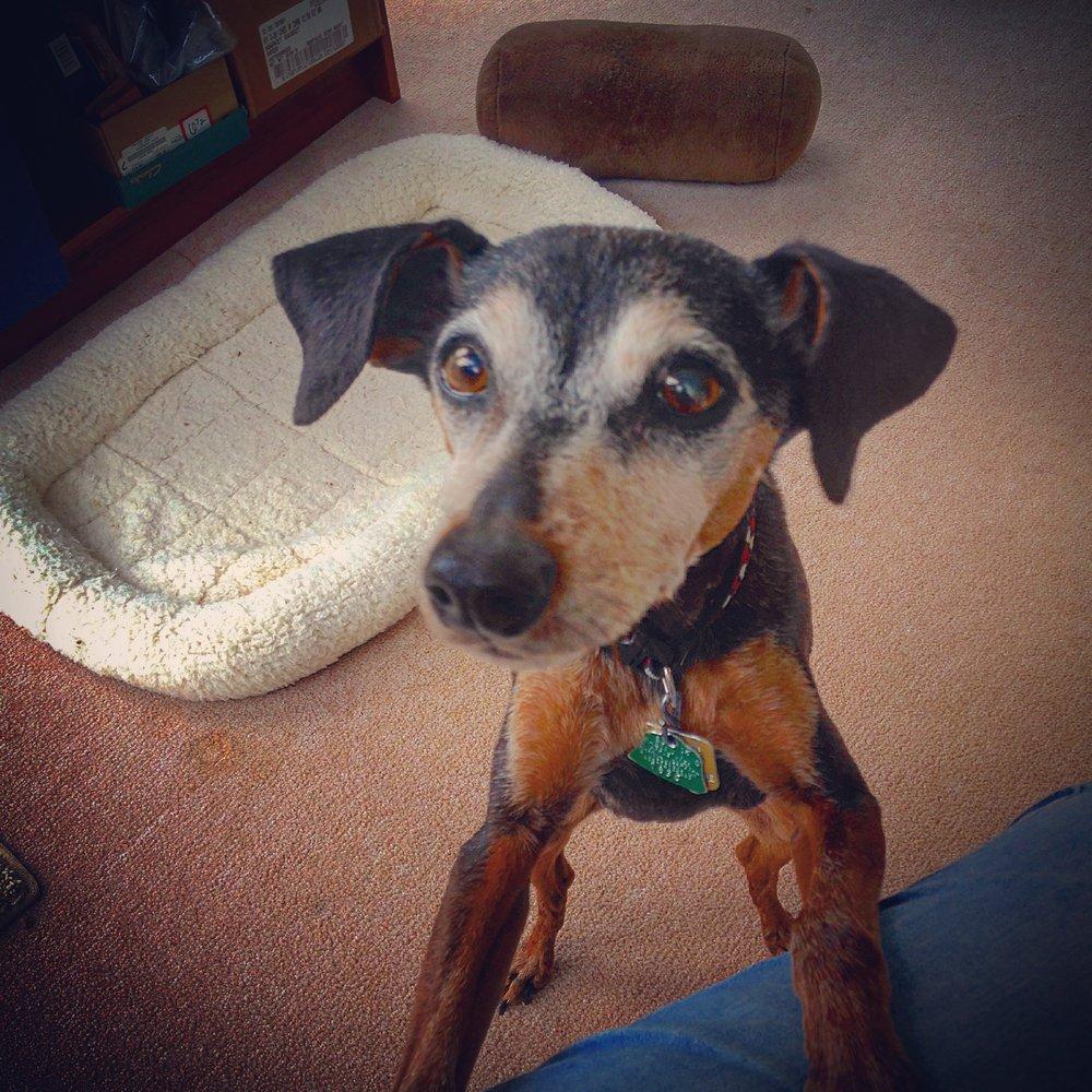 Amys Pet Sitting: Hillsboro, NH
