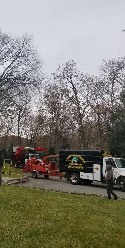 Lopez Landscaping & Tree Service: 63 High Rock St. #3, Lynn, MA