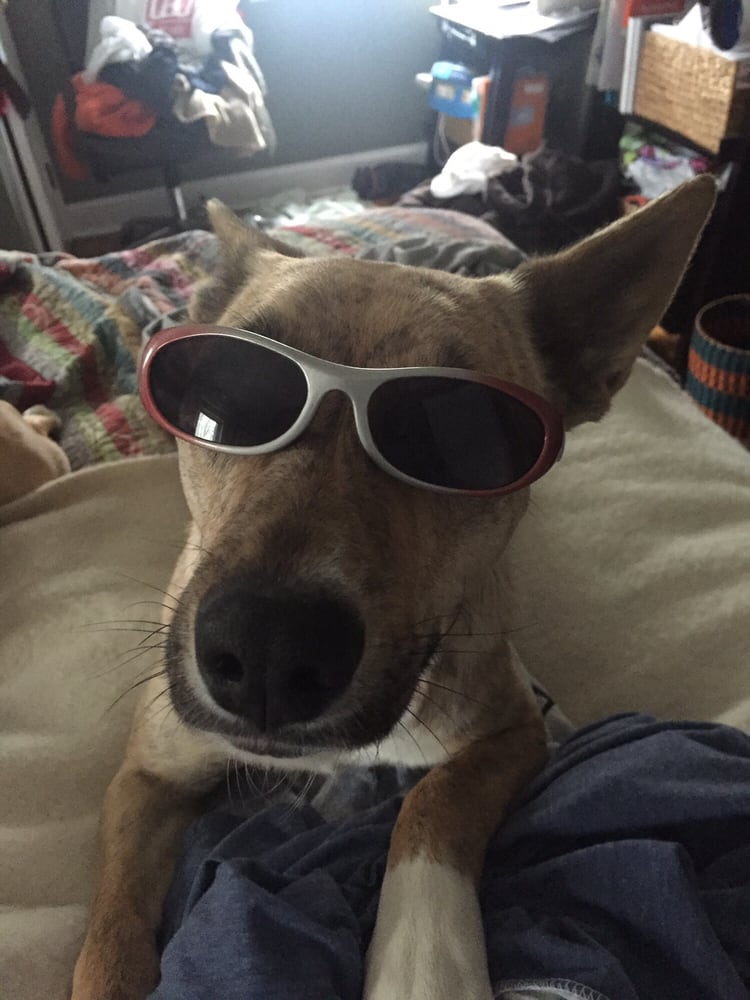 Dog Talk: 1330 Walton Rd, Blue Bell, PA