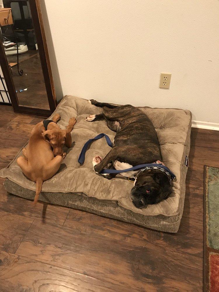 The Good Dog Training and Rehabilitation - Chatsworth