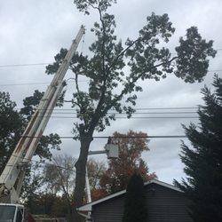 Photo Of Accurate Tree Service Neptune Nj United States