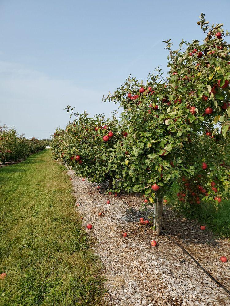 Apple Jack Orchards