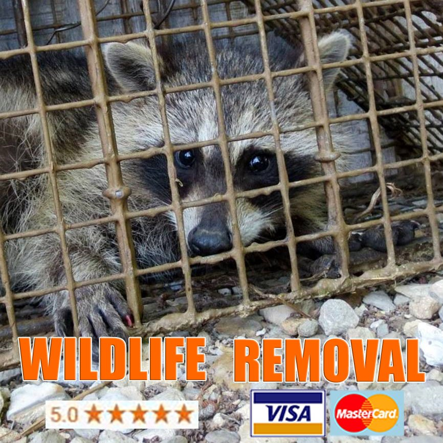 wildlife removal cost