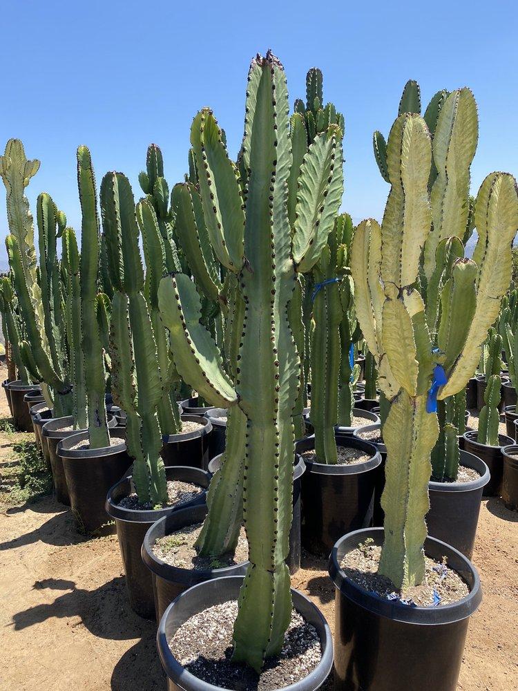 Desert Theater Nursery: 9655 Kiwi Meadow Ln, Escondido, CA