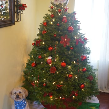 Fresh Christmas Tree Philippines.4 5 Ft Grand Fir Purchased At Pinery Christmas Trees The