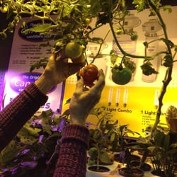 Indoor Outdoor Gardener Indoor outdoor gardener 43 photos 57 reviews hydroponics photo of indoor outdoor gardener brooklyn ny united states workwithnaturefo