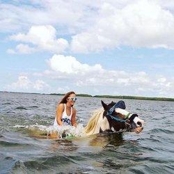 Photo Of C Ponies Beach Horseback Rides St Petersburg Fl United States