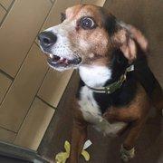 SPCA Serving Erie County - CLOSED - 11 Photos & 17 Reviews