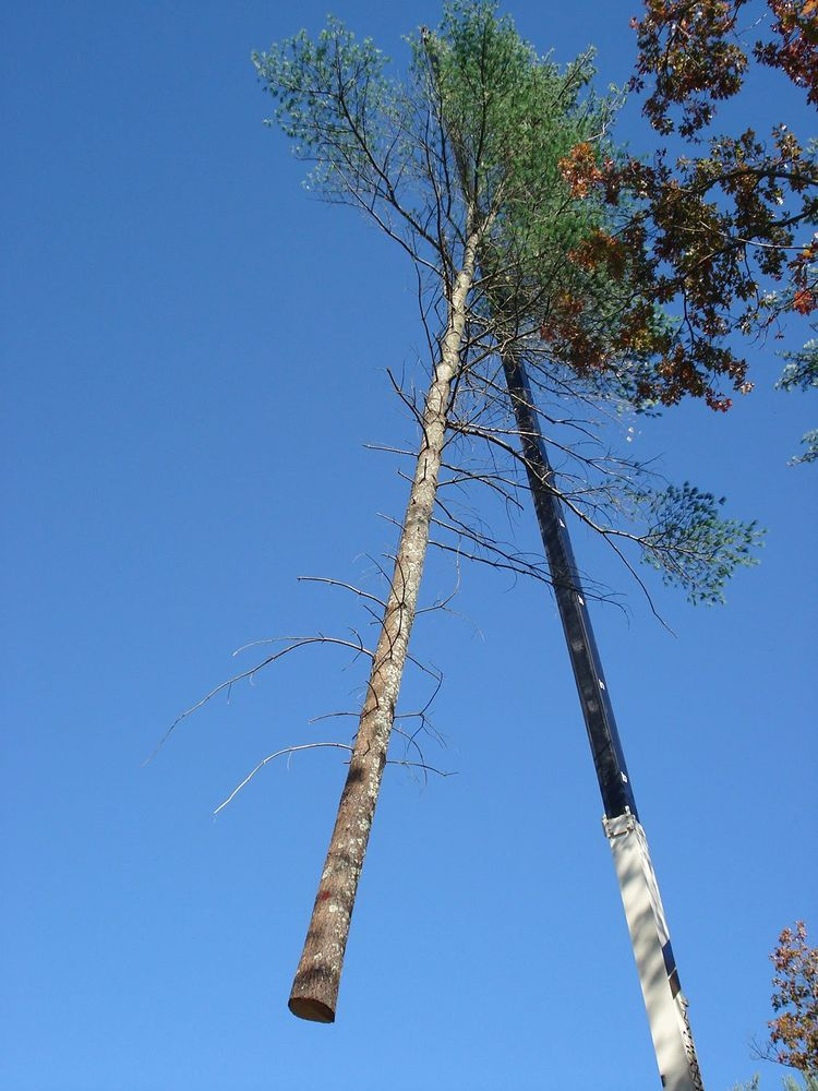South Shore Tree Removal
