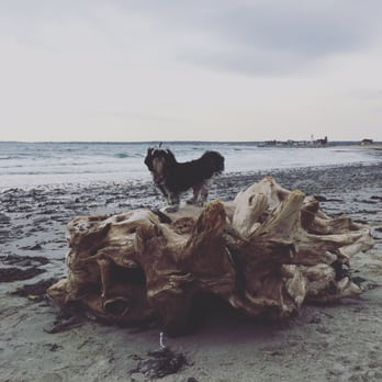 Photo Of Fortune S Rocks Beach Biddeford Me United States Driftwood Fit For