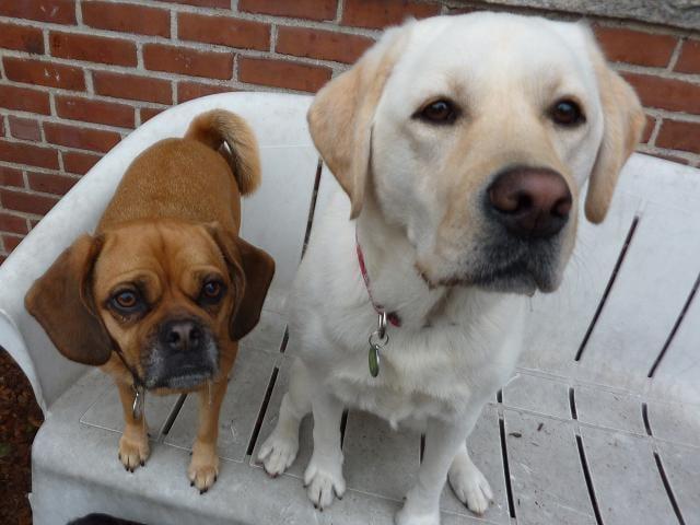Happy Tails Doggy Daycare: 7 Forge Pkwy, Franklin, MA