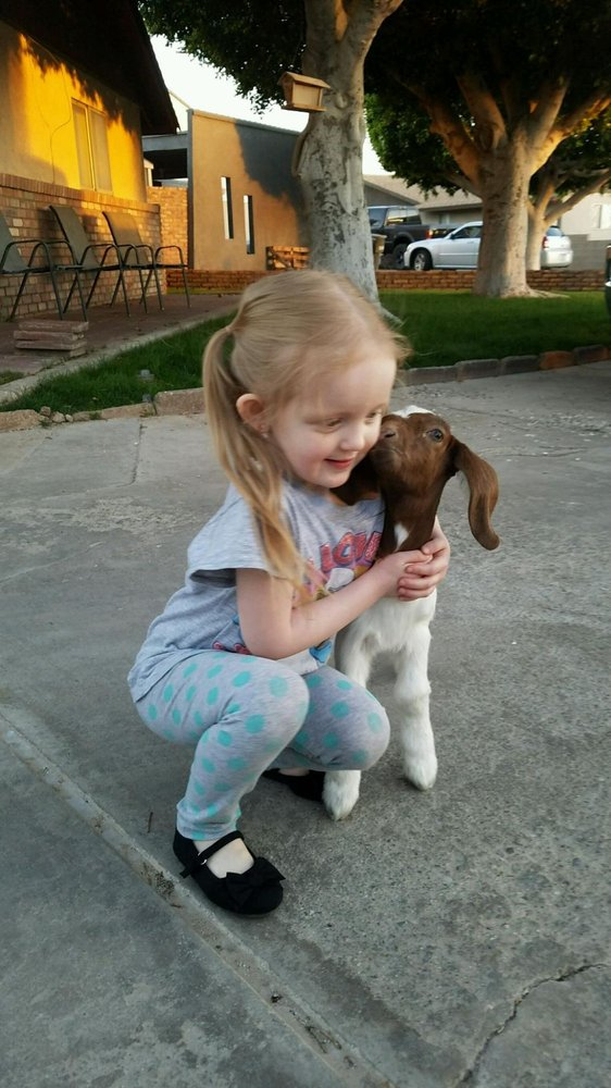 Bowzer's Body Shop Pet Grooming: 1190 S Avenue C, Yuma, AZ