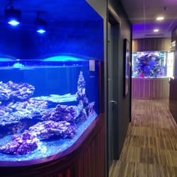 living color aquariums 24 photos aquariums 740 s powerline rd deerfield beach fl phone. Black Bedroom Furniture Sets. Home Design Ideas