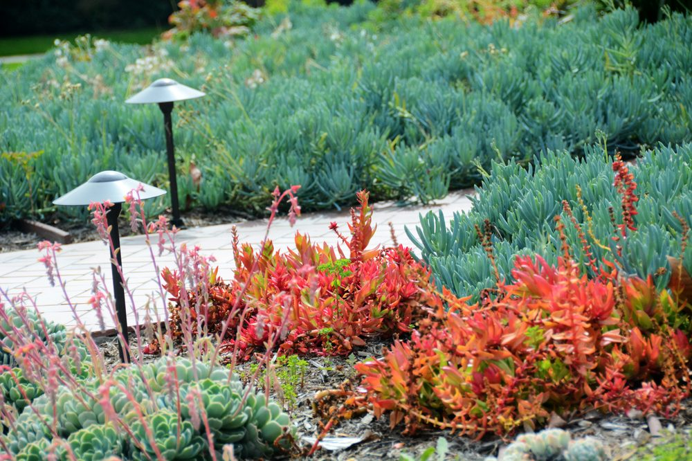 Colorful drought tolerant plants in a lawn to drought - Drought tolerant plants landscape design ...