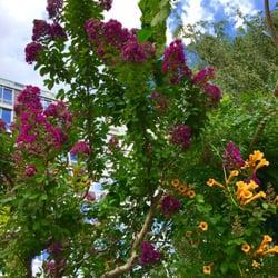 Photo Of Liz Christy Garden   New York, NY, United States. Flowers.