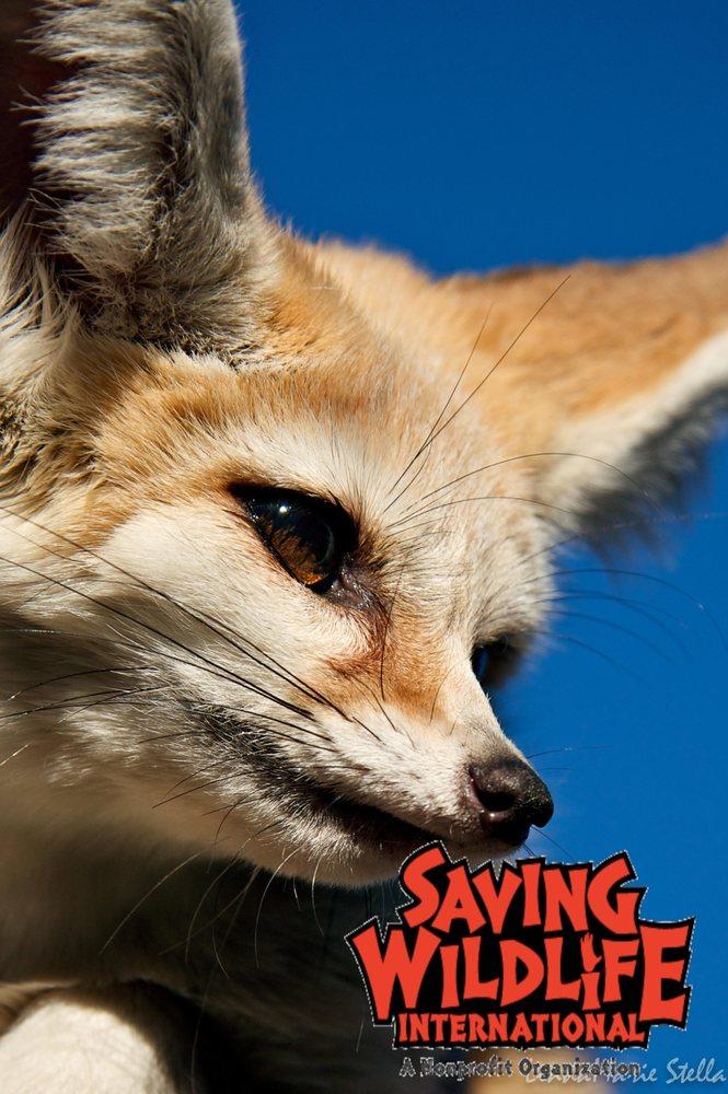 Saving Wildlife International