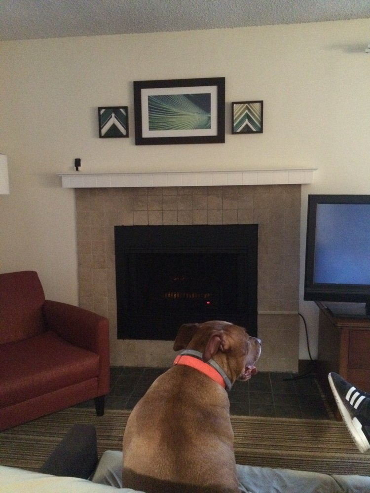 My Dog Watching Tv In Front Of A Fireplace Yelp