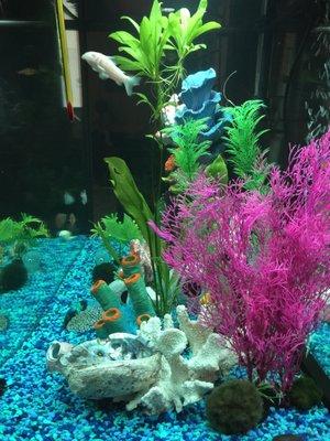 Aquarium Butler