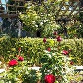 the berkeley rose garden 535 photos 195 reviews botanical gardens 1200 euclid ave north berkeley berkeley ca yelp - Berkeley Rose Garden
