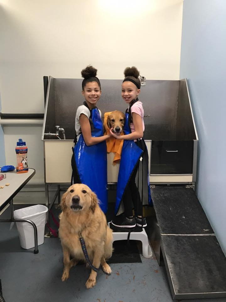 The original do it yourself doggie wash 32 photos 15 reviews the original do it yourself doggie wash 32 photos 15 reviews pet services 98 w 63rd st willowbrook il phone number yelp solutioingenieria Images