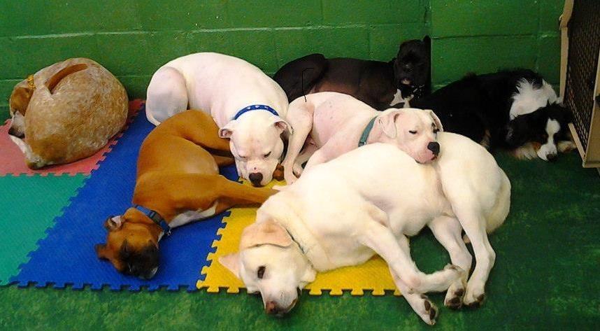 Bow Wow Doggie Daycare