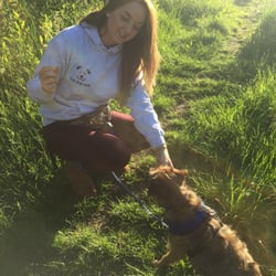 Your Dogs Walk Basingstoke