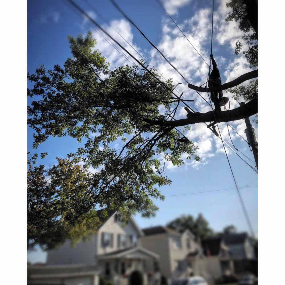 Tree Patrol Tree Service: Woodbridge, NJ