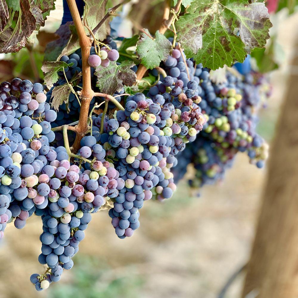 Snake River Wine Tours: Marsing, ID
