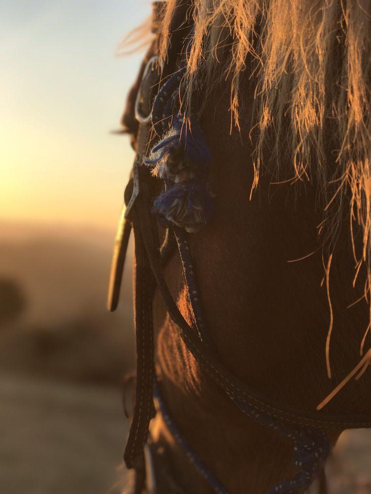Los Angeles Horseback Riding