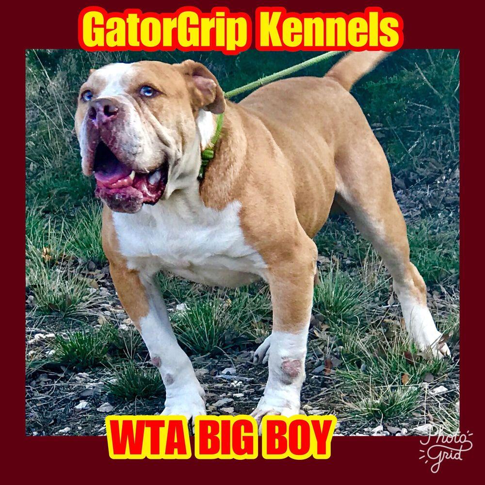 GatorGrip Kennels: Florence, TX