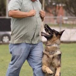 Wolfgang Expert Dog Training