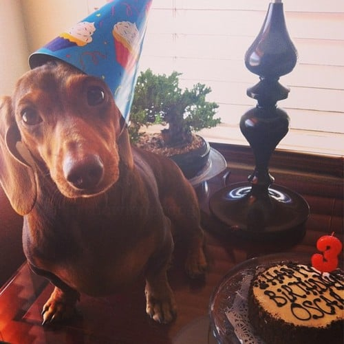 oscar the wiener dog and his carob birthday cake yelp on birthday cakes for dogs in los angeles