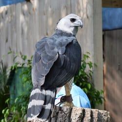 Photo Of Brookfield Zoo   Brookfield, IL, United States. Bird Show At  Brookfield ...