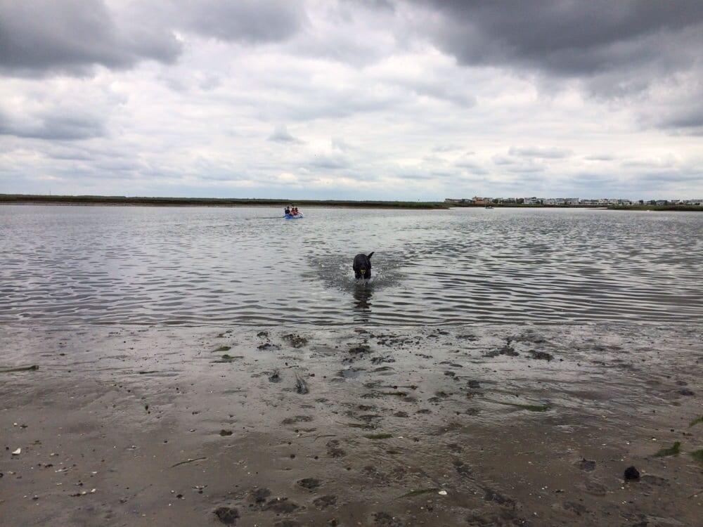 Avalon's Kayak Beach