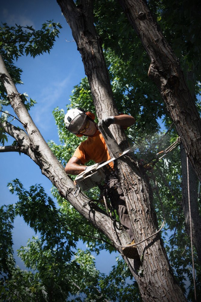 Neighborhood Tree Care