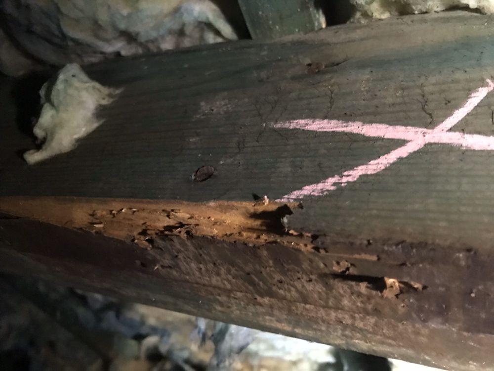Xtreme Termite & Pest Control