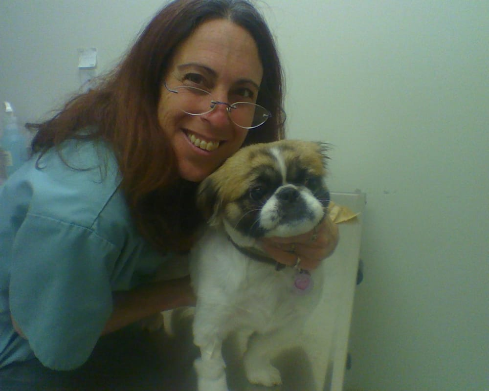 Spring Valley Animal Hospital: 151 Rte 59, Airmont, NY