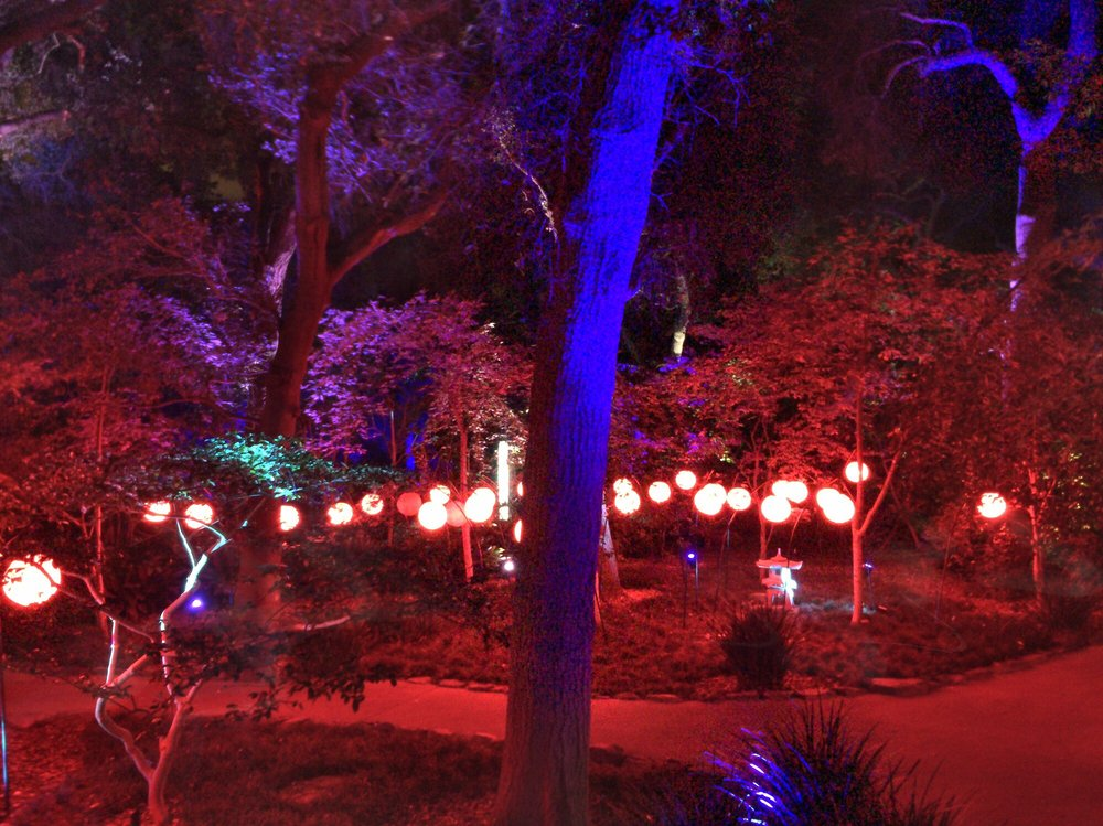 Photos for enchanted forest of light at descanso gardens - Descanso gardens enchanted forest of light ...