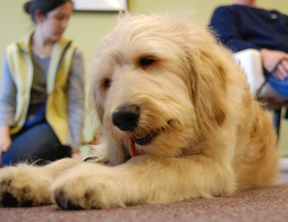 Fido Dog Training Ferndale Mi