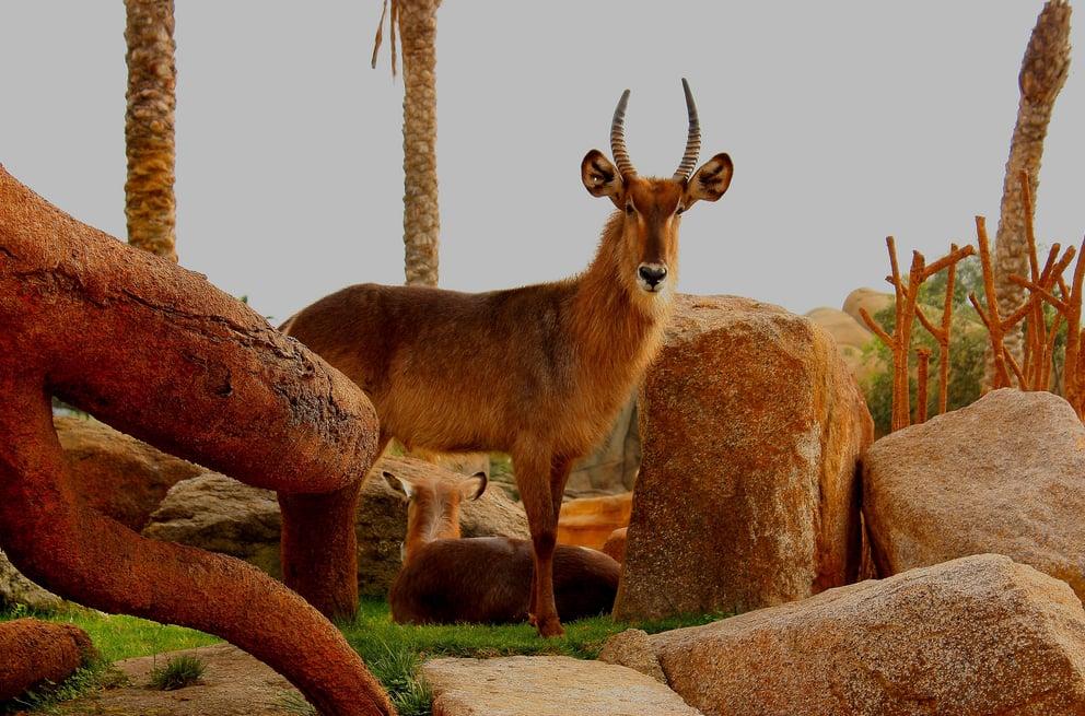 Bioparc 198 foto e 41 recensioni zoo avinguda de p o - Telefono bioparc valencia ...