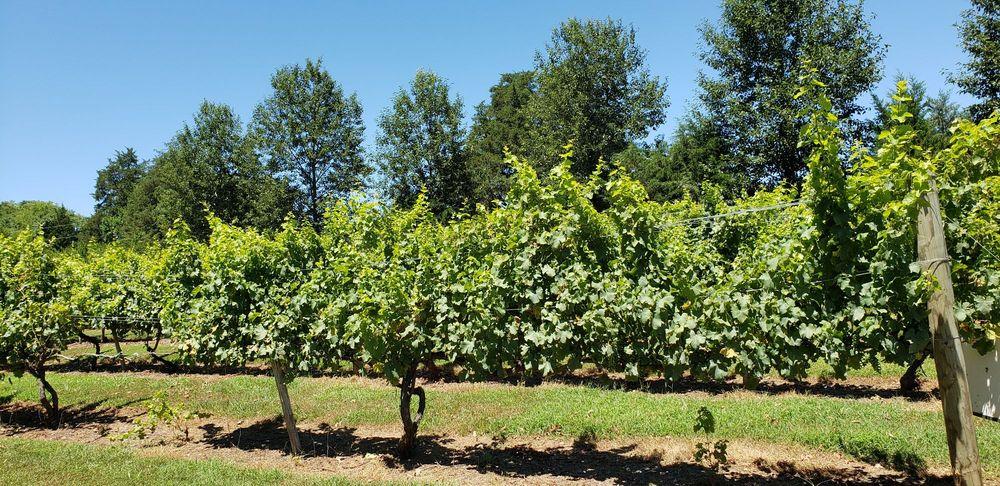 Elk Island Winery: 5759 River Rd W, Goochland, VA